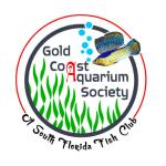 gold aquarioum
