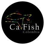 cavfish
